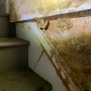 Mold damage near stairs